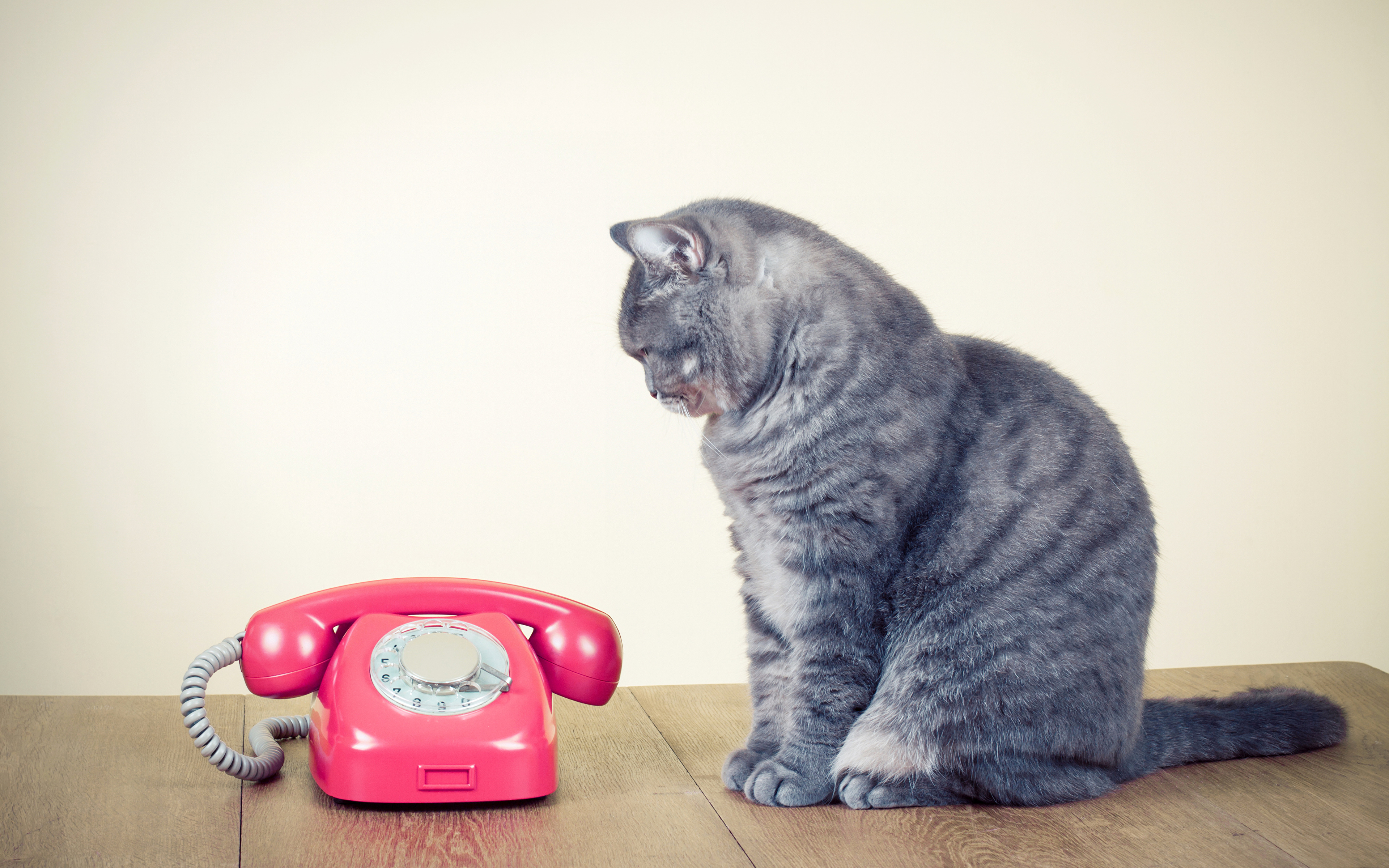 Cats Telephone 435572 3840x2400