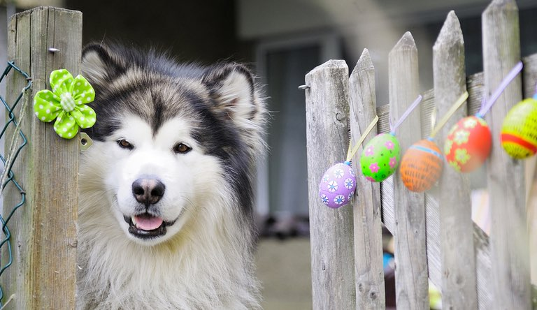 easter-dog-pictures